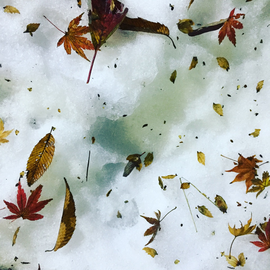 hakone snow and fallen leaves